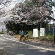 目黒でお花見2016(2)駒沢オリンピック公園と呑川緑道