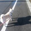 台風一過の朝、愛ちゃんと一緒にお散歩したよ♪