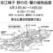 安江梅子 野の花・蘭の植物画展