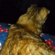 寝かしつける猫