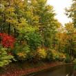 色づく ブナの林 ミヤマナラ も