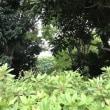 木陰から見える景色