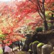 ・ 大山寺 紅葉が見頃です 2017