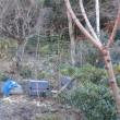 12月の庭仕事