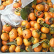 秋の味覚の収穫と懐かしのメロディ『もっと愛しあいましょ - LINDBERG』&『B'z「BLOWIN'」 』