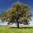 あれから一年・・・ 豊頃町のはるにれの木