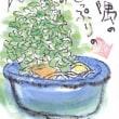 ●「ドングリ」 (月・水・金発信)