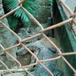 熱川バナナわに園
