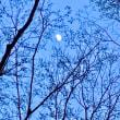 月 の 花 ✨