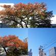 11月14日(水)今日の北川桜