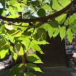 清々しい夏の葉っぱ
