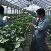 気仙沼地区いちご生産者の環境モニタリングデータ活用の取組