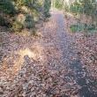落ち葉を踏む