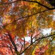 有馬温泉瑞宝寺公園の紅葉 2015年11月6日