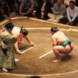 お相撲観戦
