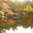 20-Nov-17 病院帰りに石神井公園