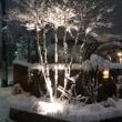今季初の大雪、幻想的に変身したマルガリータの庭