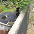 河川の増水・・・結構ギリギリ
