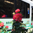 都心の5月の薔薇 大塚駅界隈