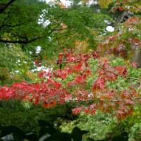 木々の紅葉と花・殿ヶ谷戸庭園