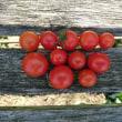イモ掘りと紫蘇の実の収穫