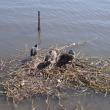 手賀沼の探鳥