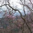 雨降り直前の鳴虫山ですが、大変よき山行になりました。 鉢石山から鳴虫山へ