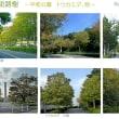 色づく街路樹 -平和公園、トウカエデ等-