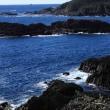 伊豆爪木崎、野生の水仙と灯台からの風景