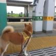 オラの お気に入り駅。 (^v^)