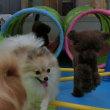 幼稚園体験にきてくれた【ヒッポちゃん】&【オリバーくん】(*^-^*)  犬のしつけ教室@アロハドギー