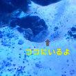 八景島行ってきたよ!!