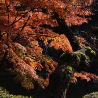 晩秋の紅葉  by 神田佳明