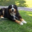 火災から救われた犬