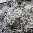 春分の日 鎌倉でも雪が積もったよ(友人投稿)
