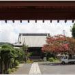 本興寺の百日紅