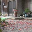 山寺の猫ちゃんに会えましたよ~♪