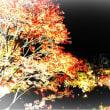 桜のつぶやき  世界遺産 東寺 にて