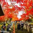 「大山の紅葉祭り 2017」華やか~艶やか!!