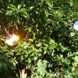ファスナー付きティッシュポーチふたつ♪  &  知人から紀州犬・熊五郎物語の画像が♪  & ブルーベリー初採り~♪ イソヒヨ避けのディスクがすごく良く光る(笑)