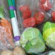 野菜の袋詰め