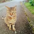 10月13日(土)のつぶやき 人懐っこく寄って来たけど、君、どっかで会わんかったか? 今朝も違う猫が寄って来た!なぜ逃げない?(笑