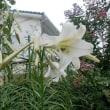 我が家の8月の花