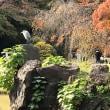 小石川後楽園で。