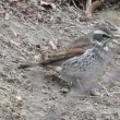 「ほたるの里緑道」 冬鳥きています