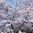第78回桜花賞・検討