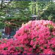 根津神社(つつじの丘)