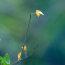 写力の気楽なカメラアングルー早朝の小呂池