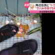 """風鈴・テレビ""""騒音女""""、殺人未遂で逮捕(神奈川県小田原市)"""