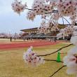 桜のスタジアム
